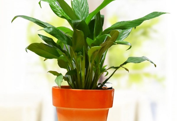 Green plants online